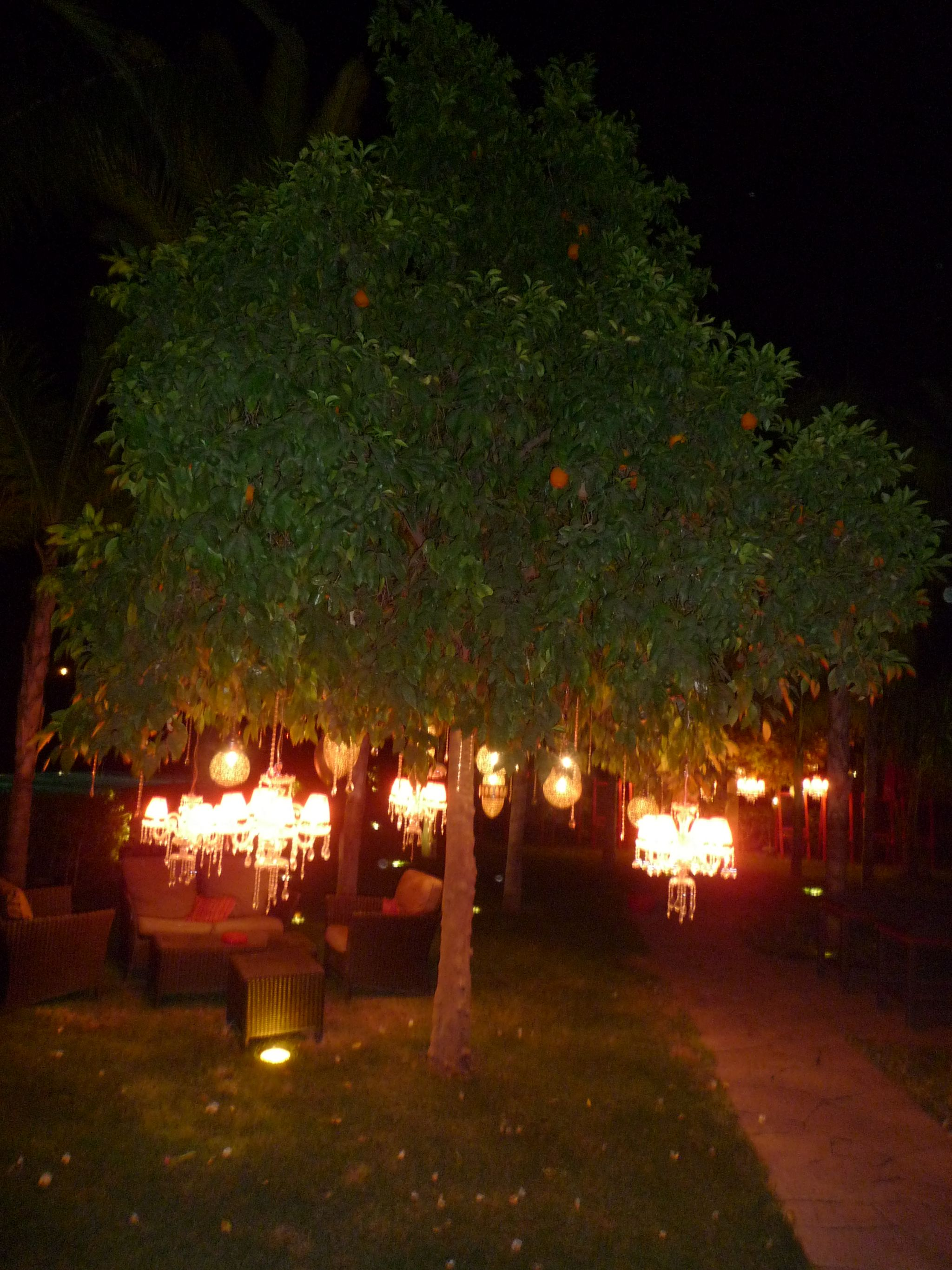 Tree with Moroccan lamps